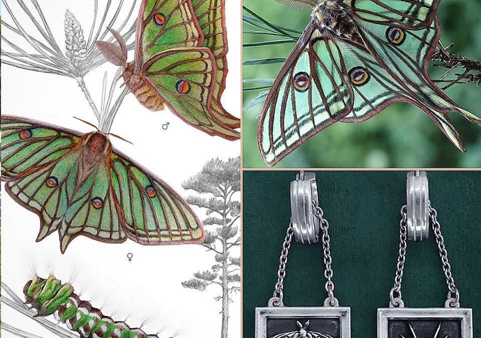 Histoire des boucles d'oreilles Graellsia de la ligne Entomologie